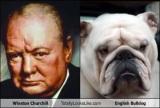 Winston Churchill and the BulldogMyth